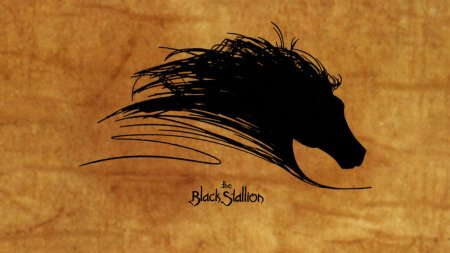 blogpost_theblackstallion